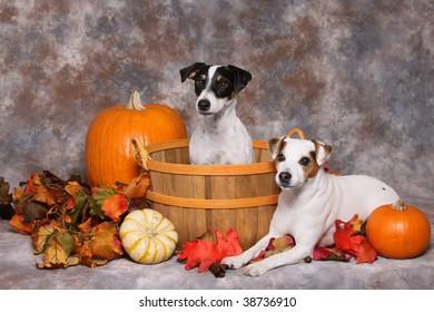 Cute little dogs in autumn scene