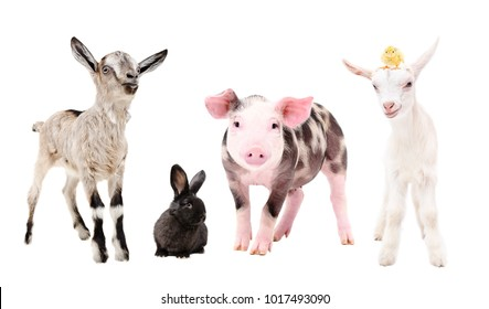 Cute little farm animals, standing together, isolated on white background