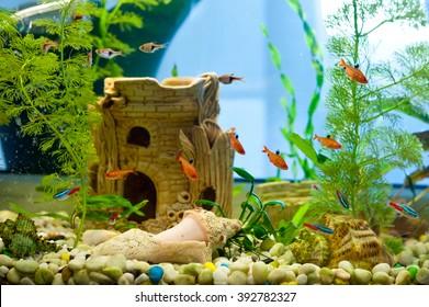 Aquarium Decoration Images Stock Photos Vectors Shutterstock
