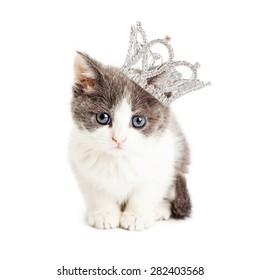 Cute little five week old kitten wearing a rhinestone princess crown