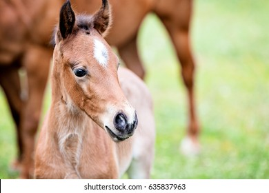 Cute little foal, close-up, outdoor