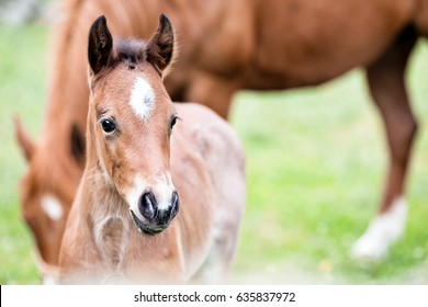 Cute little foal, close-up, outdoor