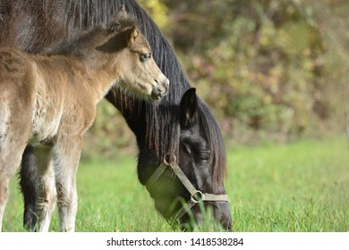 Cute little foal with its mother in a meadow