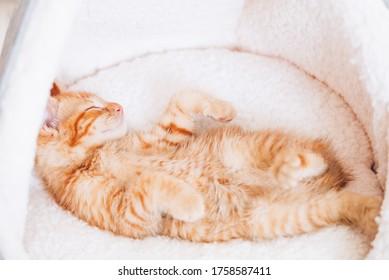 Cute little ginger kitten sleeps on the back on white soft cat bedding with hood