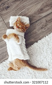 Cute little ginger kitten wearing warm knitted sweater is sleeping on the floor