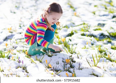 Cute little girl in colorful dress watching first spring crocus flowers under snow on sunny cold day. Child picking garden flower. Kid on Easter egg hunt. Family and nature fun on snowy spring day