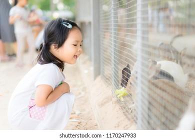 Cute little girl feeding rabbit on the farm