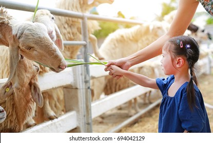 Cute little girl feeding sheeps by grass