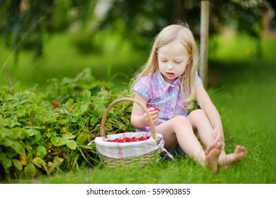 Cute little girl picking fresh wild strawberries on organic strawberry farm on warm and sunny summer day
