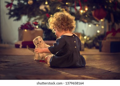 Cute little girl is playing with little kitten in front of big new year tree at home in Russia. Image with selective focus and toning.