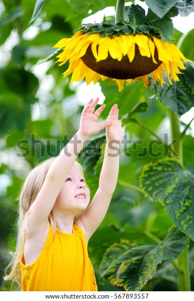 Cute little girl reaching to a sunflower in summer field