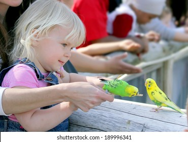 Cute little girl with the little shell parakeet
