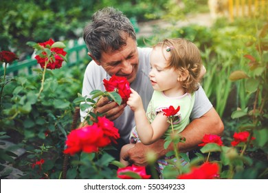 Cute little girl touching flower with grandfather in garden of roses.