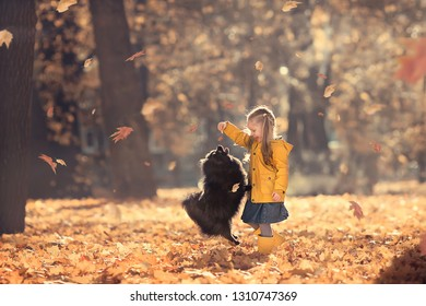 Cute little girl is walking in a beautiful golden autumn park playing her dog. Image with selective focus and toning.