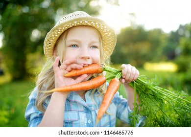 Cute little girl wearing straw hat holding a bunch of fresh organic carrots. Fresh healthy organic food for small kids. Family nutrition in summer.