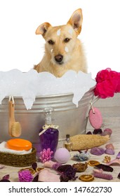 Cute little golden terrier sitting in a metal bath tub full of bubbles surrounded by bathing accessories enjoying a shampoo and pampering at a dog parlor