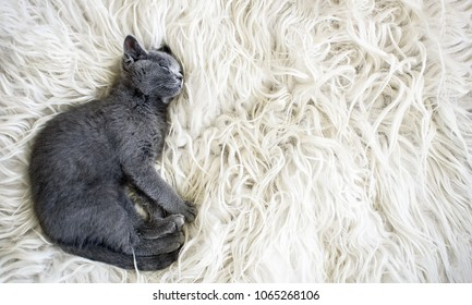 Cute little gray kitten sleeps on fur white blanket