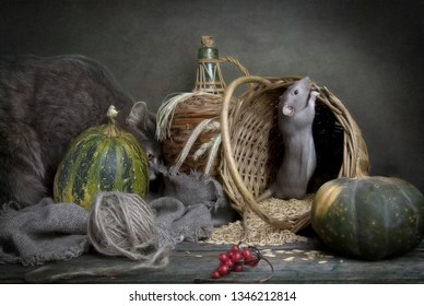 Cute little gray rat, mouse in a basket with corn and pumpkins and big gray cat. Still life in vintage style with a live rat. Chinese New Year symbol