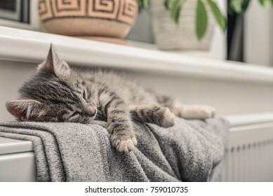 Cute little grey kitten  relaxing on the warm radiator closeup