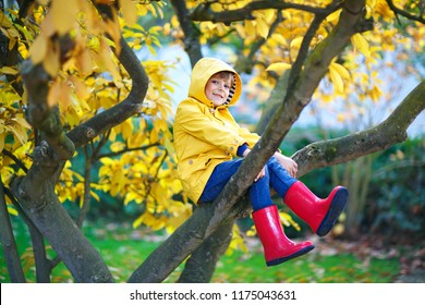 Cute little kid boy enjoying climbing on tree on autumn day. Preschool child in colorful autumnal clothes learning to climb, having fun in garden or park on warm sunny day