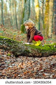 Cute little kid boy enjoying climbing on tree on autumn day. Happy child in autumnal clothes learning to climb, having fun in forest or park on warm sunny day. Fall time in nature