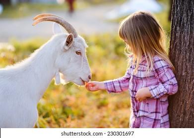 cute little kid feeding a goat at farm