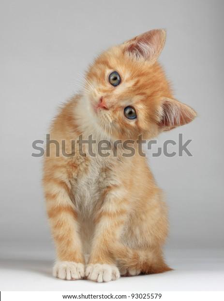 Симпатичный маленький котенок