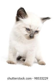 cute little kitten with blue eyes