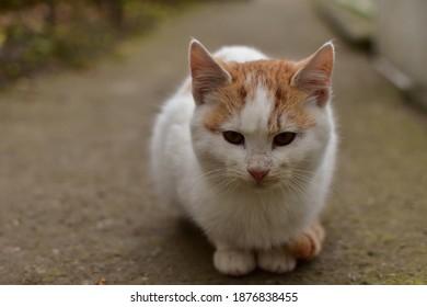 Pequeño gatito lindo durante un día de otoño