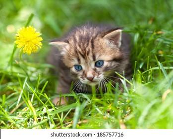 Cute little kitten in the grass