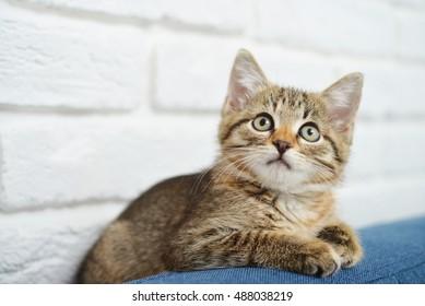 Cute little kitten lying on sofa closeup, small depth of field