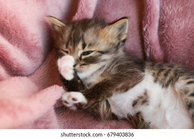 Cute little kitten lying on soft plaid at home