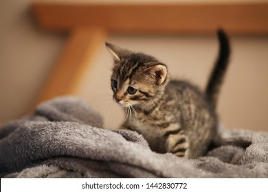 Cute little kitten on bed. Caring for pets, pet from the shelter for animals.