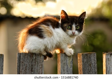 A cute little kitten sitting on an old wooden fence. Warm summer country scene in bright shades of sunset, with a pet.