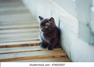 cute little kitten sitting on wooden boards