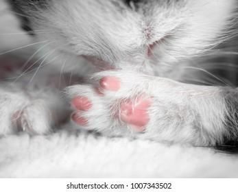 A cute little kitten sleeps on a white carpet on sun. Cute sleeping kitty close-up