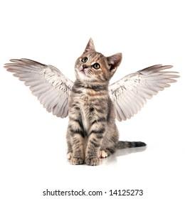 Cute little kitten with wings
