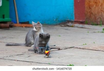 Cute little kittens play with toy RC helicopter. Funny scene