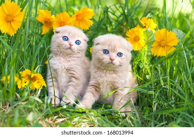 Cute little kittens sitting in flower meadow