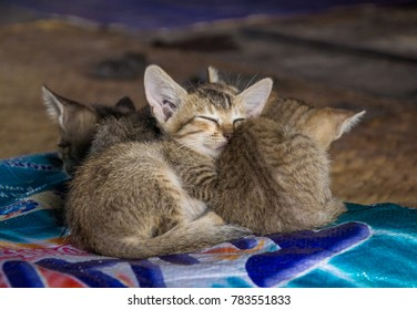 Cute little kittens sleeping