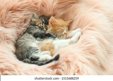 Cute little kittens sleeping on pink furry blanket