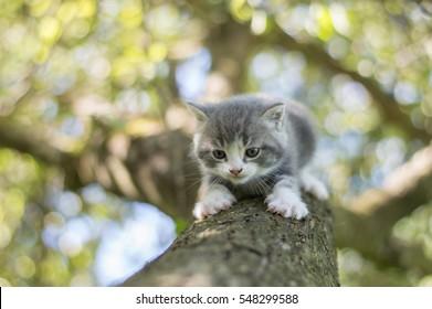 Cute little kitty