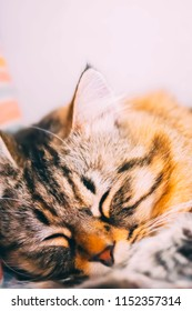 Cute little kitty is sleeping in soft blanket on bed. Summer day