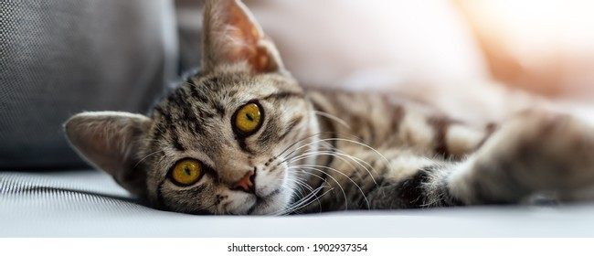 Cute little lazy tired tabby cat relaxing enjoy lying, napping and dreaming on cozy wicker armchair at backyard in warm sunset lights. Funny happy domestic pet sleeping on sofa at yard. wide banner