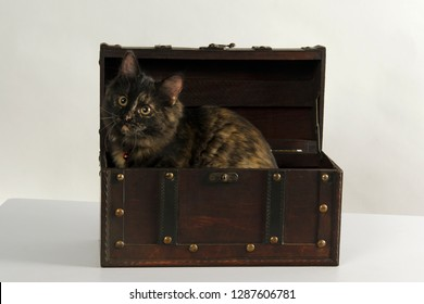 Cute little long-haired kitten of tortoiseshell color sits in open old traveling case of leather and wood to fill with treasures in studio against white background.