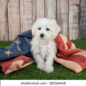 Cute little Maltipoo puppy sitting in the grass with an american flag.