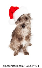 A cute little mixed  terrier breed dog sitting while wearing a red Santa hat