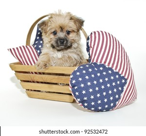 Cute little Morkie puppy sitting in a basket with American Flag pillows on a white background.