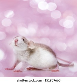 cute little mouse isolated on a pink background