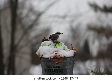 Cute little nut hatch holding a nut in it's beak standing on top of a snowy metal bucket filled with Christmas bulbs and bittersweet berries, set in a moody background.